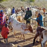 Support to local pastoralist